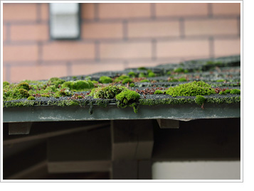moss removal oxfordshire